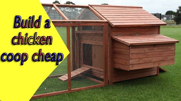 How to Build Cheap Chicken Houses